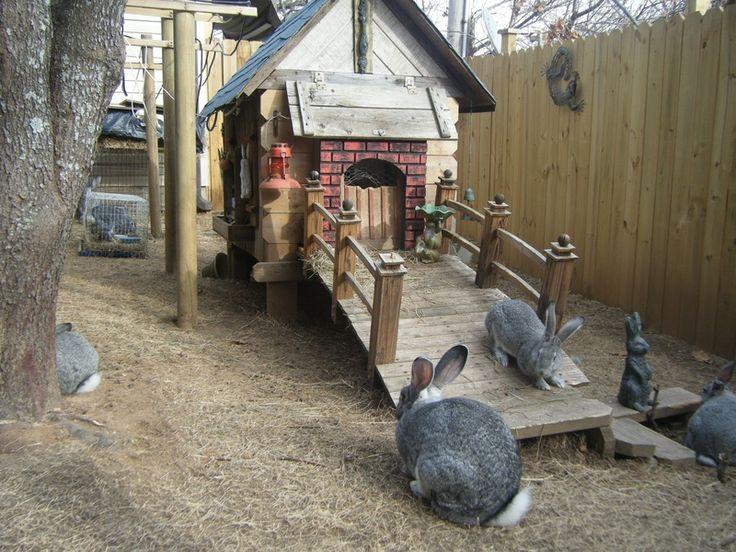 Nice bunny habitat~
