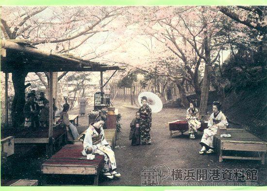 野毛山の桜〔彩色写真・日下部金兵衛〕