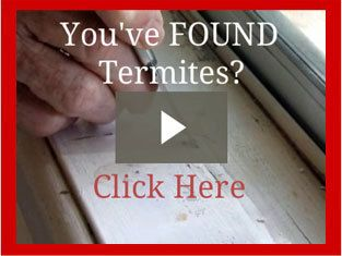 DIY Termite Bait - short video on how to put bait on suspected termite infested area http://termitetrap.com.au/