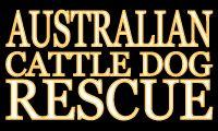 Australian Cattle Dog Rescue - Website