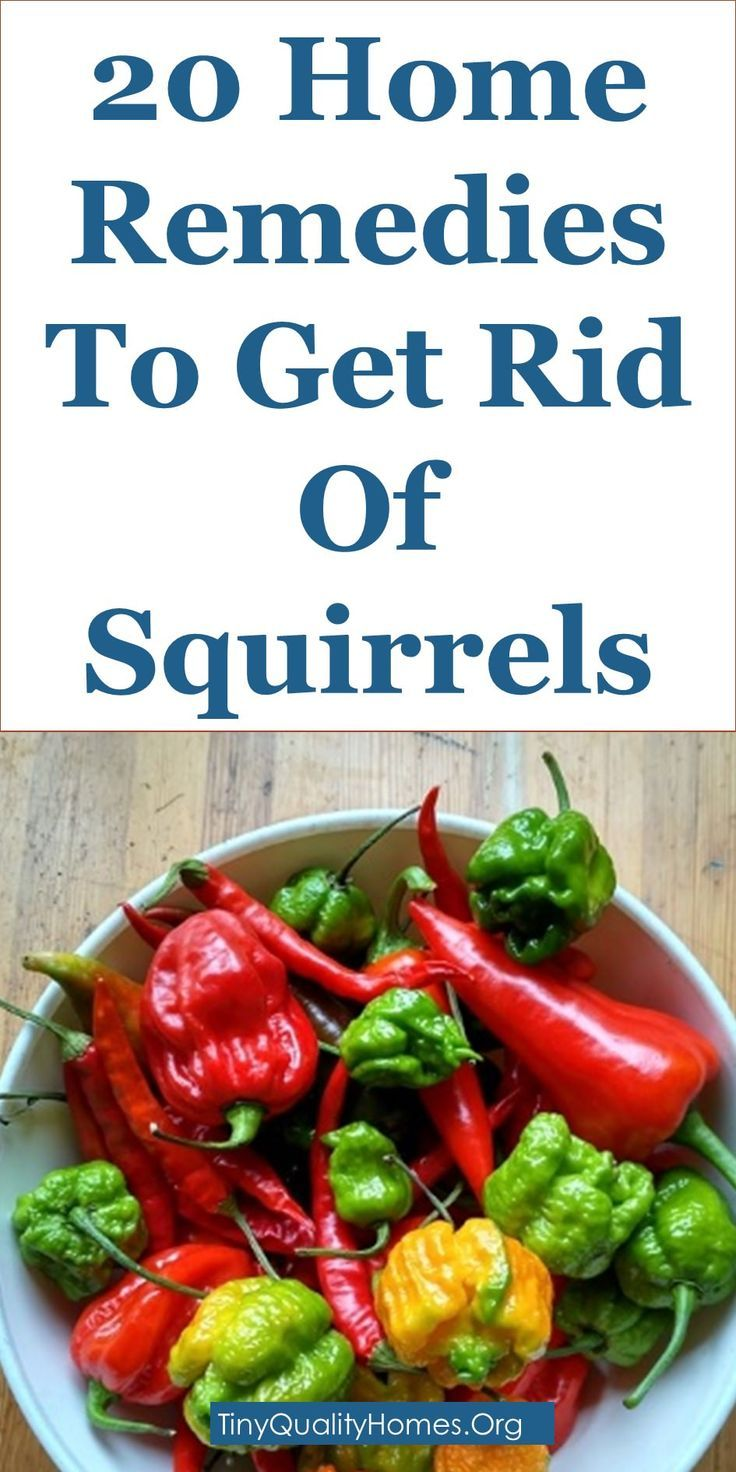 20 Home Remedies To Get Rid Of Squirrels (Squirrel