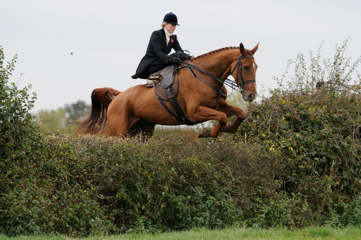 Hunting sidesaddle with The Quorn