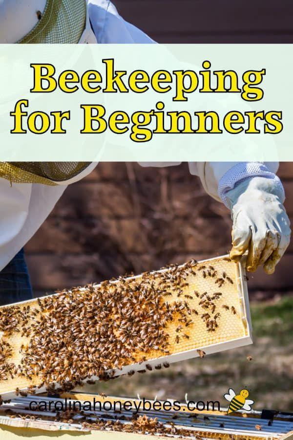 Beekeeping for Beginners   Beekeeping for beginners, Bee ...