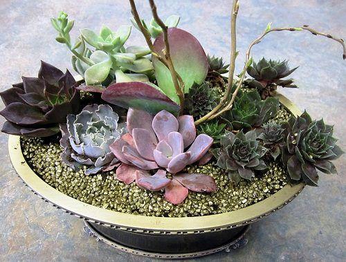 Dish Garden Plants