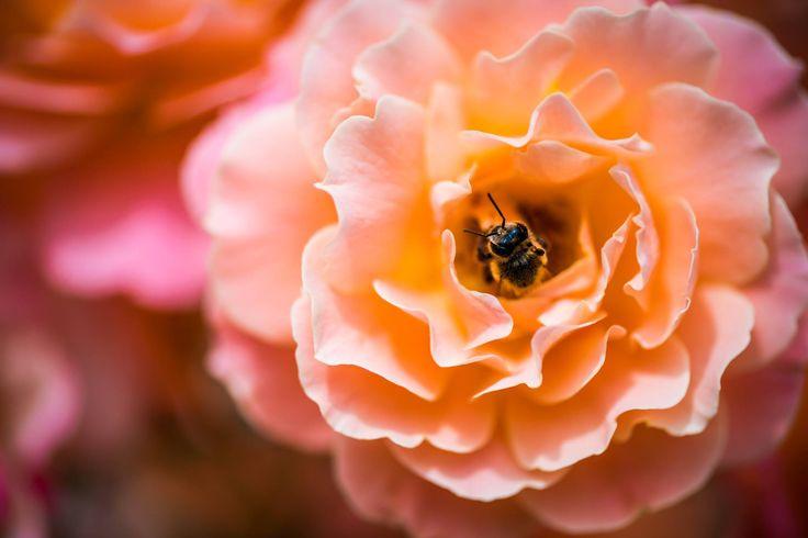 La Cera d'Api tonifica la struttura della pelle e ne attenua le imperfezioni. E' un prezioso rimedio naturale che aiuta a calmare ed idratare tutti i tipi di pelle. La Crema viso Iatitai alla Pueraria Mirifica e Cera d'Api con effetto rassodante ed emolliente, unisce i riconosciuti effetti estrogeni e ringiovanenti della Pueraria Mirifica alla preziosa Cera d'Api che vivacizza e distende la pelle offrendo una naturale protezione all'azione dei raggi solari.