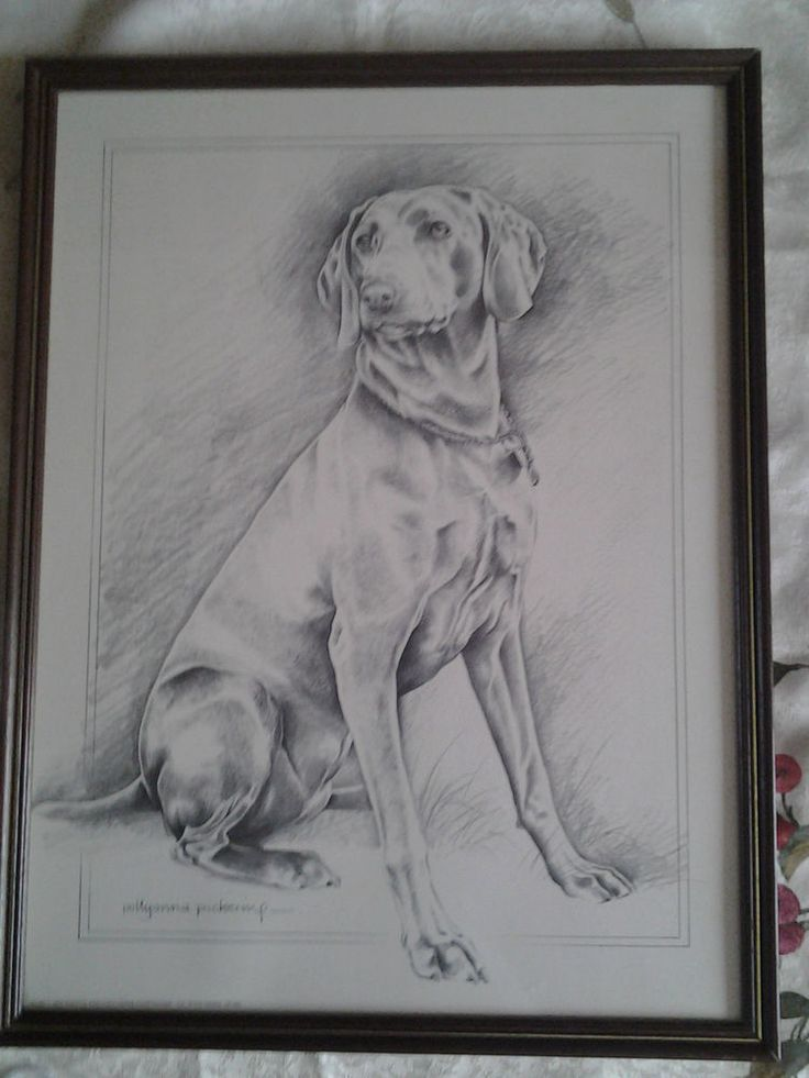 12½ X16½  POLLYANNA PICKERING framed print Labrador retriever pencil drawing