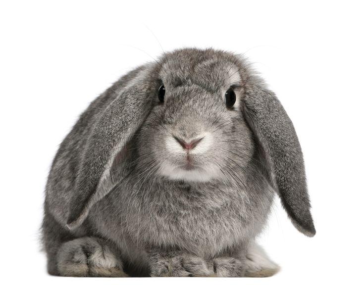 Dierenkliniek mortelplein konijn