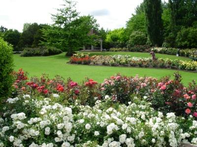 Beautiful Rogers Rose Garden at Hamilton Gardens in Hamilton, NZ