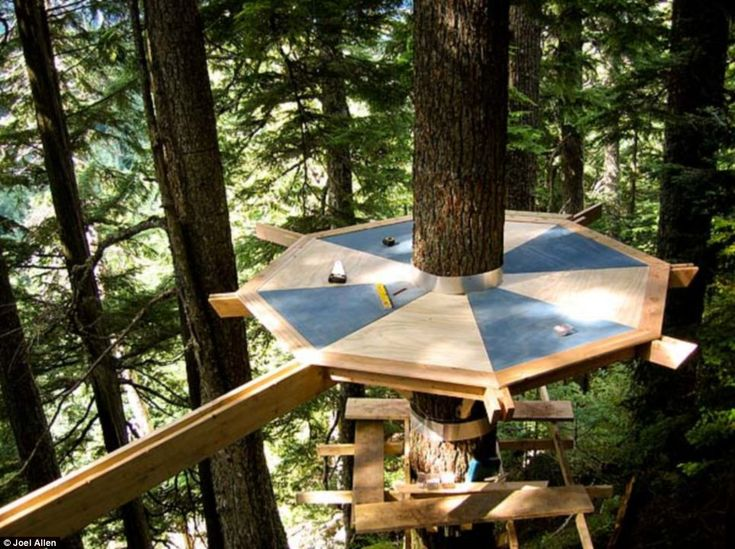 Delightful U0027Squatteru0027 Secretly Builds Incredible (but Thoroughly Illegal) Treehouse  Hidden In Canadau0027s Whistler Forest Just Yards From Multi Million Homes