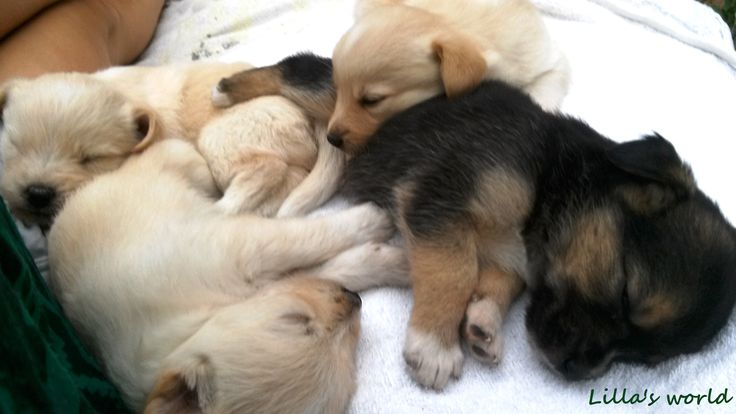 Sweetest, mixed dog babies on the world! Three boys + 1 girl♥ Love them really really ♥