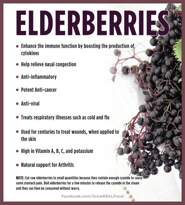 Elderberry Benefits PLUS a Recipe for Elderberry Syrup - Grow REAL Food - Organic, Non-GMO Food in Your Backyard