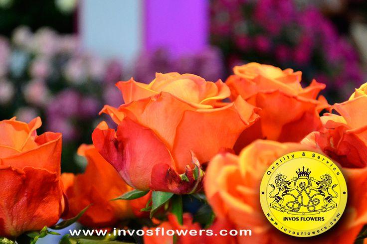 invosflowers invosflowers #invosflowers #colombia #flowers #colombianflowers #proflora #proflora2015 #roses #rose #bestflowers #ecuadorianflowers #kenyanflowers #flowersofinstagram #bestflowers #beautifullflowers #flowerslovers #florist #bestflowers