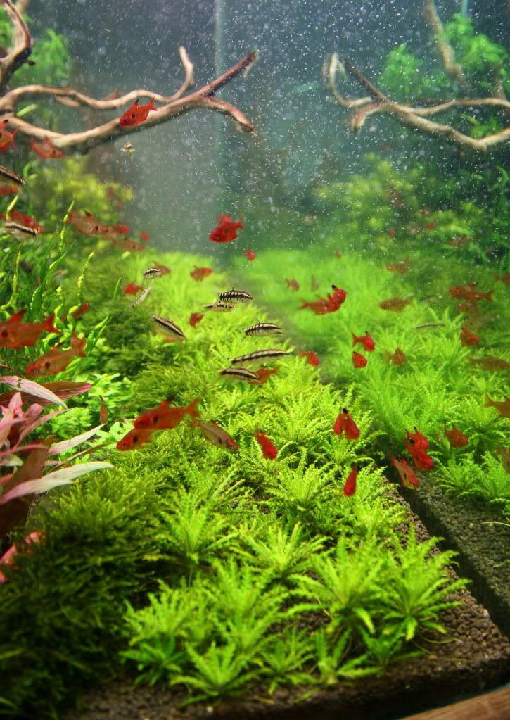 17 best ideas about 120 gallon aquarium on pinterest for Plant fish tank