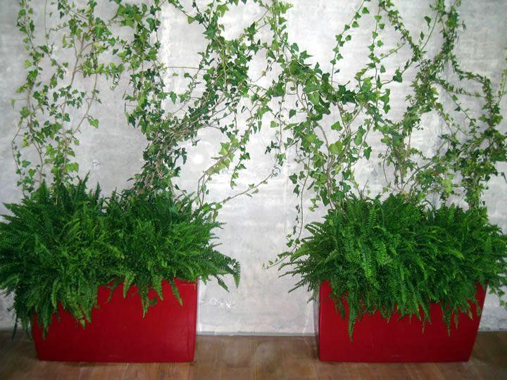 Punica Peyzaj » Hizmetlerimiz: Saksı bahçeciliği (Container Gardening)