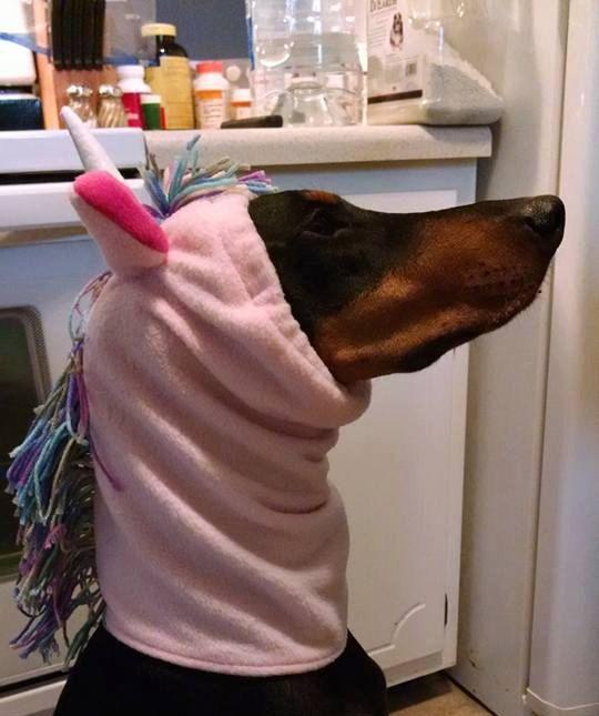 Fleece Dog Snood/Ear and Neck by OneEyedDogCreations on Etsy