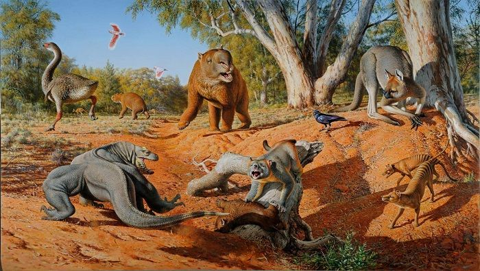 New evidence involving the ancient poop of some of the huge and astonishing creatures that once roamed Australia indicates the primary cause of their extinction around 45,000 years ago was likely a result of humans, not climate change. Led by Monash University in Victoria, Australia and the University of Colorado Boulder, the team used information …