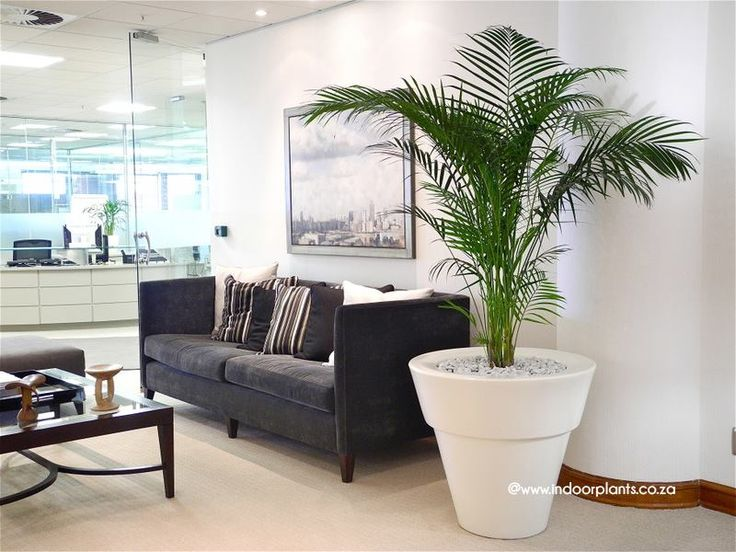 healthy with good plants for an office