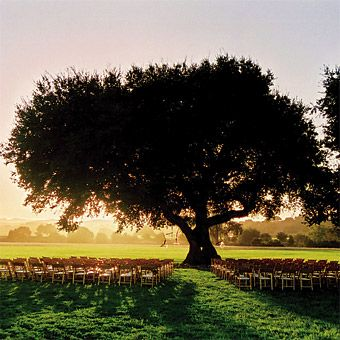 Rebecca and David exchanged vows under an oak tree that was once two separate trees; over time, the trunks and branches twisted together, forming a single tree. Firestone Vineyard, 5000 Zaca Station Rd., Los Olivos. | Jose Villa Wedding Photography | Brides.com
