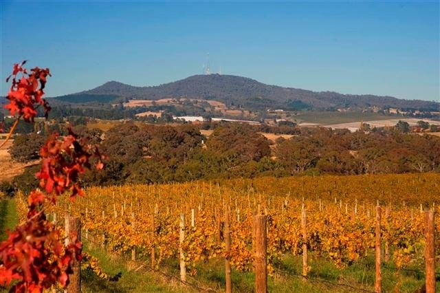 Mt Canobolas & Vines