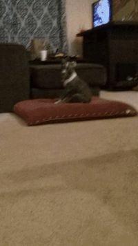 Vicious pitbull attack http://ift.tt/2t4nQ0r