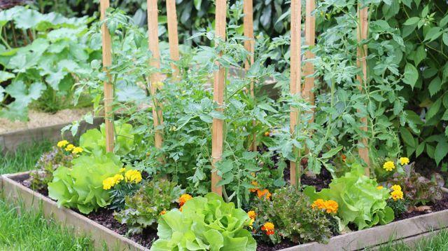 25 best ideas about calendrier plantation potager on pinterest calendrier plantation. Black Bedroom Furniture Sets. Home Design Ideas