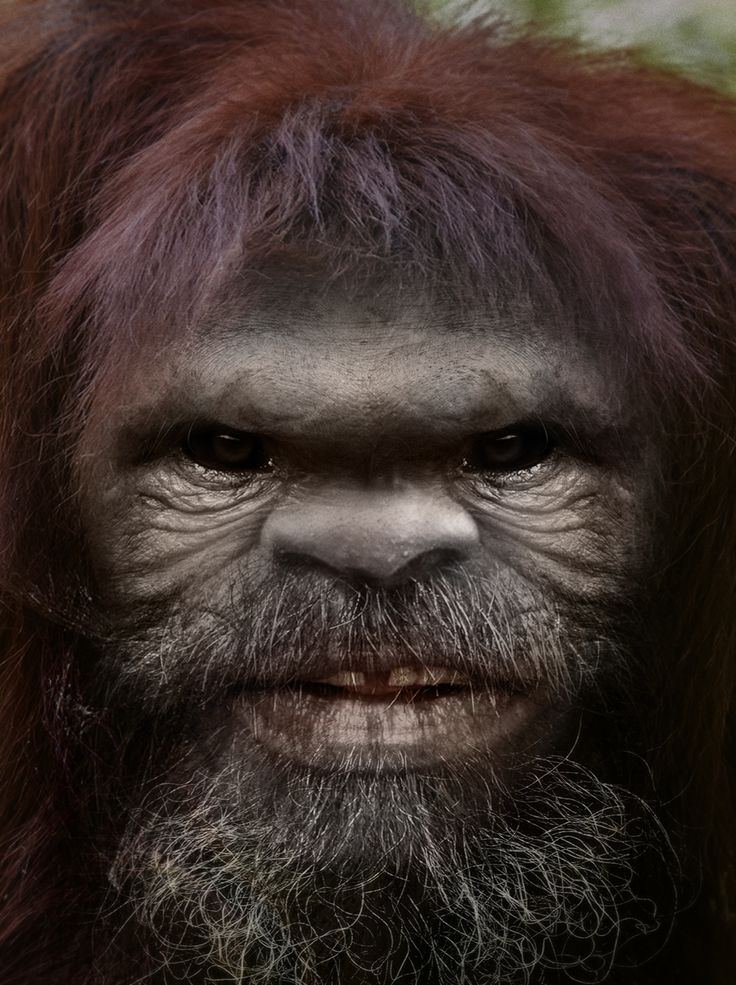 """a look at the hairy man like creature bigfoot Apparently, leif had several sightings of the """"huge hairy men""""  people believe  that the creature """"skellring"""" is what we know today as bigfoot  the europeans, so the mention of skellrig being huge and hairy seem to nail it."""