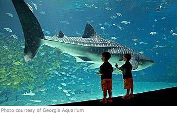 Minnesota Public Aquarium : hours for newport aquarium newport aquarium video tour newport ...