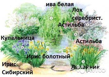 Клумба N 43, Цветник у пруда