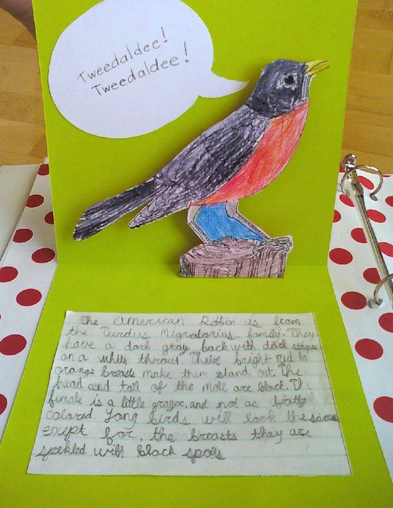 Bird Lapbook
