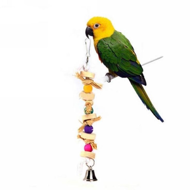 Zeroyoyo Parrot Pet Bird Chew Toy Wooden Straw with Bell Cage Swing Toys Accessory 30cm >>> You can find more details by visiting the image link. (This is an affiliate link and I receive a commission for the sales)