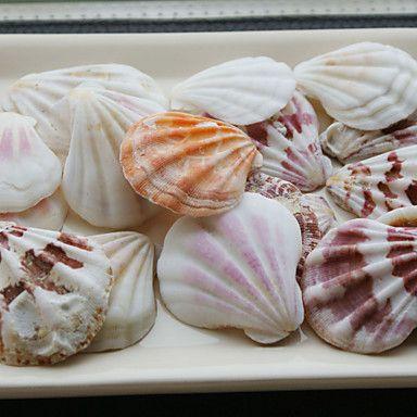 Wedding Décor Beach Themed Shells - Set of 4 Packs (35 pieces/Pack) – USD $ 15.99