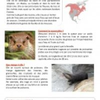 Lecture documentaire-Toutes les fiches CE1 CE2 - pdf Tous les thèmes :)