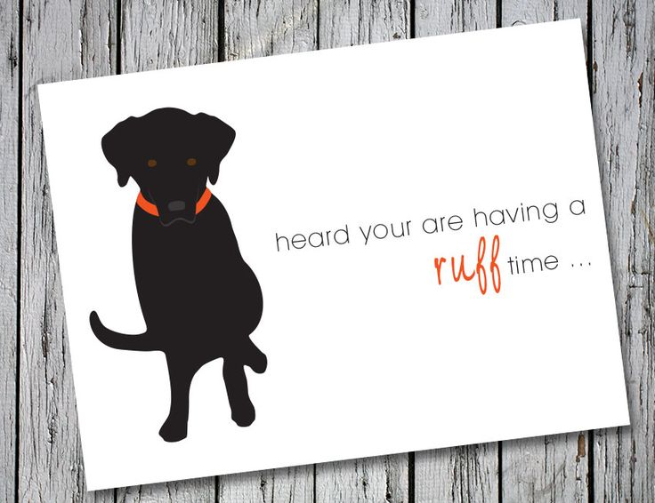 Drake Speaks Black Labrador Get Well Card The Message On