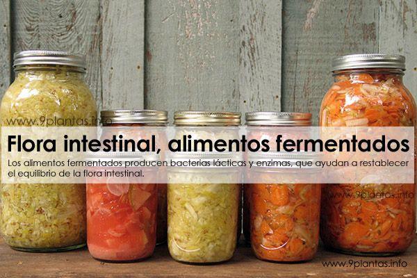 Los alimentos fermentados producen bacterias lácticas y enzimas, que ayudan a restablecer el equilibrio de la flora intestinal.