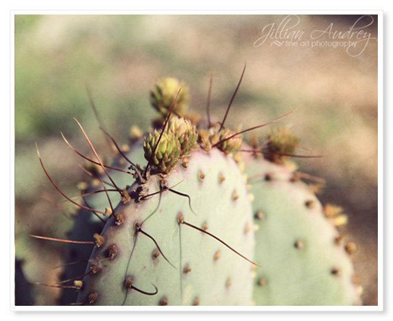 Cactus Photography, Rustic Southwest Home Decor, Macro Photography, Nature Photography, Texas Arizona Wall Art, Purple and Green, Plant