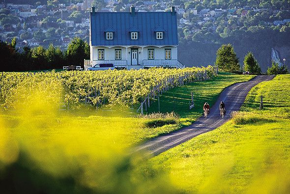 Picture of people biking down a country road on Ile d'Orleans, Quebec