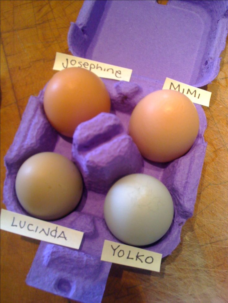 clockwise from the top: Rhode Island Red egg; Plymouth Barred Rock egg; Ameraucana egg and also Ameraucana egg