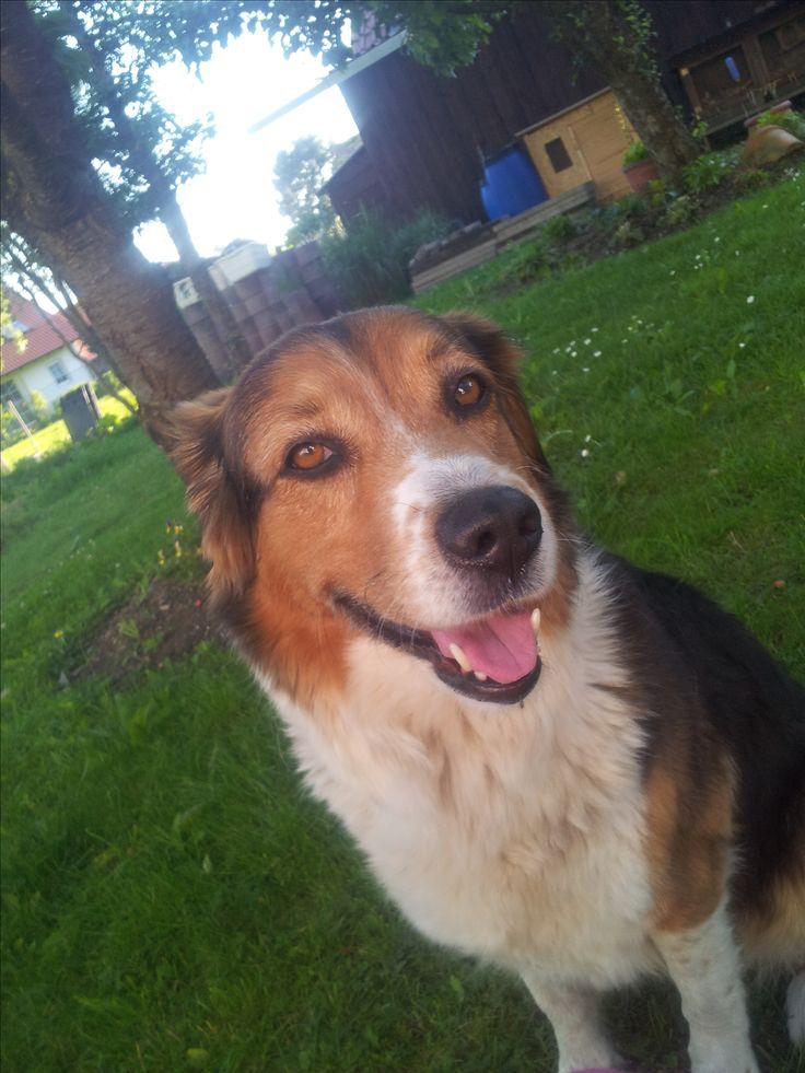 Hunde Foto: Janine und Cindy - Australian shepherd mischling Hier Dein Bild hochladen: http://ichliebehunde.com/hund-des-tages  #hund #hunde #hundebild #hundebilder #dog #dogs #dogfun  #dogpic #dogpictures