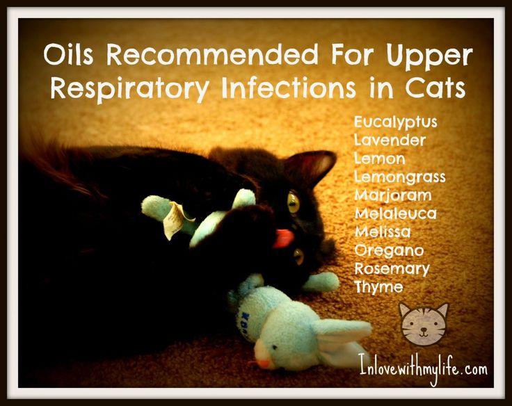 Pour plus d'informations sur l'utilisation des huiles essentielles, contrairement à la croyance trompeuse, les chats ne sont pas toxiques. Veuillez consulter Melissa Shelton.