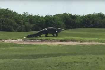 Alguém filmou este crocodilo gigante andando casualmente por um campo de golfe nos EUA