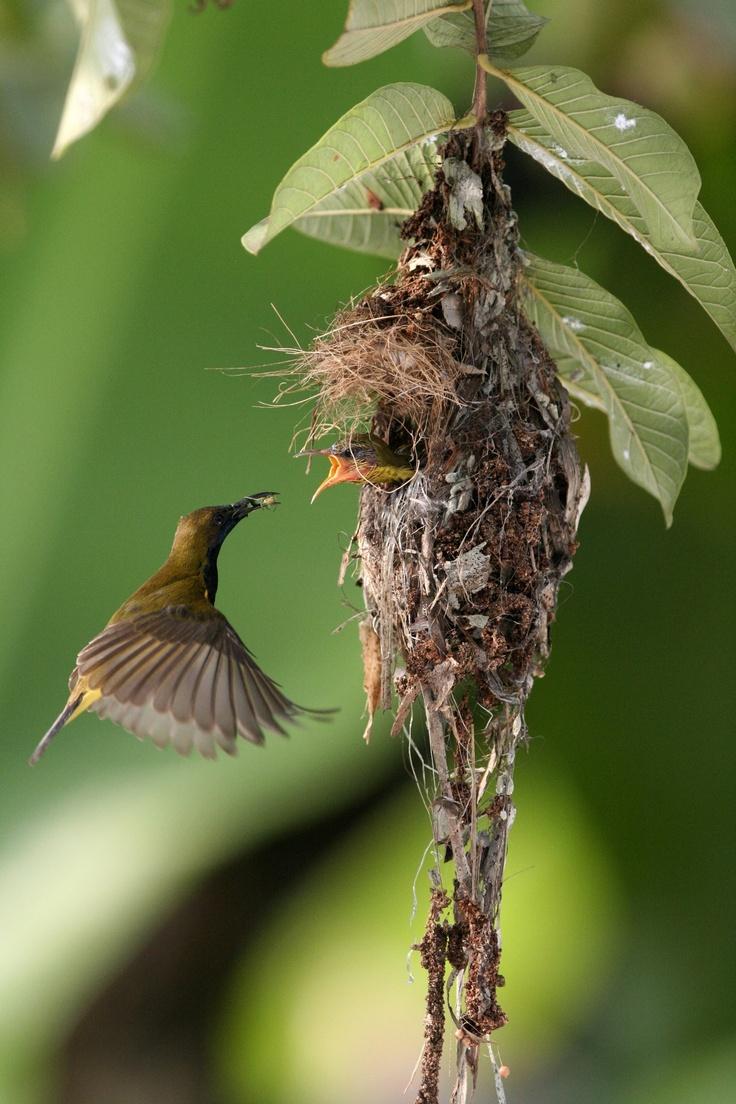 Bird #feeding, #love mother.