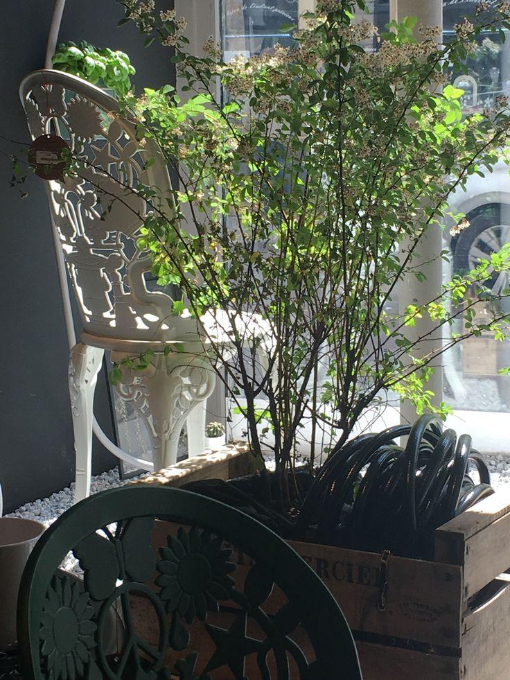 Chaise de jardin designée par Studio Job pour Seletti