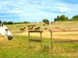 Chevaux en liberté dans les prés de l'Espace Natura 2000 de la base de loisirs de Saint Quentin en Yvelines © Base de loisirs SQY