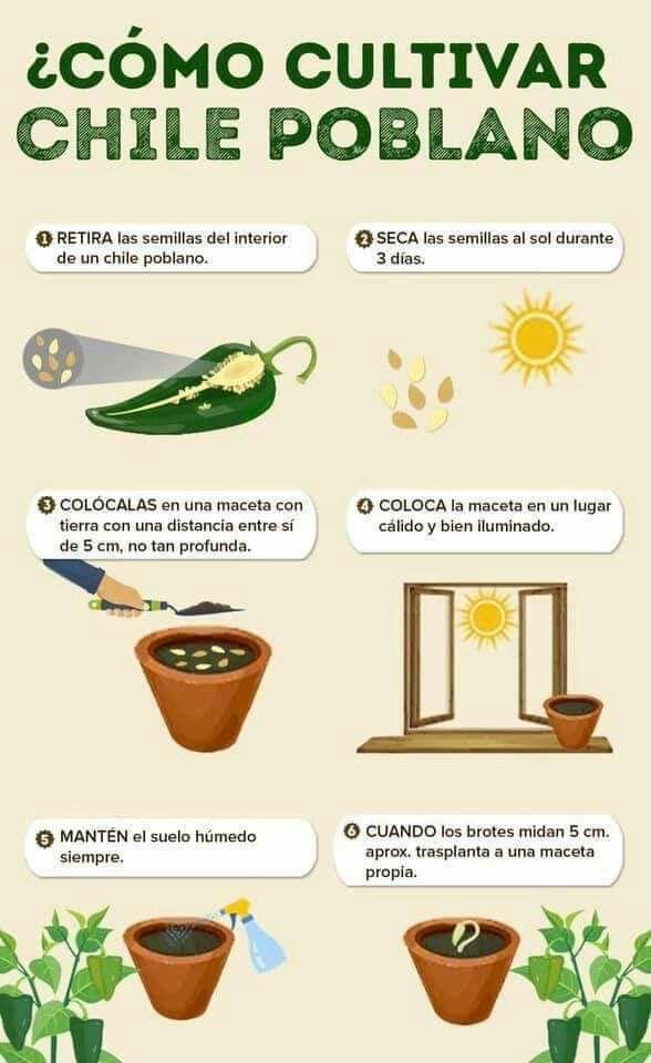 Pin De Adriana Gomez En Plantitias Cultivo De Plantas Jardineria Y Plantas Como Cultivar Frutillas