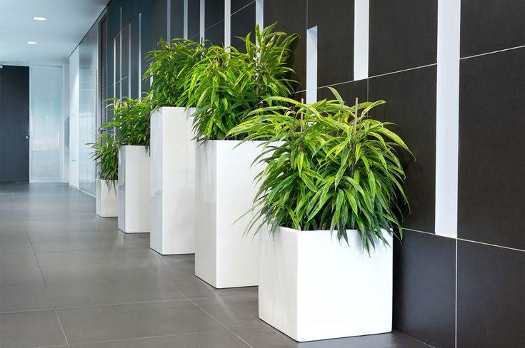 die besten 25 ficus ideen auf pinterest ficusbaum pflanzen f r innen und geige blatt feige. Black Bedroom Furniture Sets. Home Design Ideas