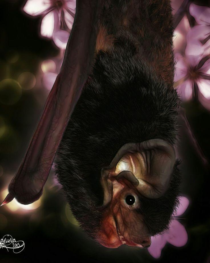 Lilly Bat  .. Mary Crichton  .. permanent little resident  .. Adelaide Bat Care