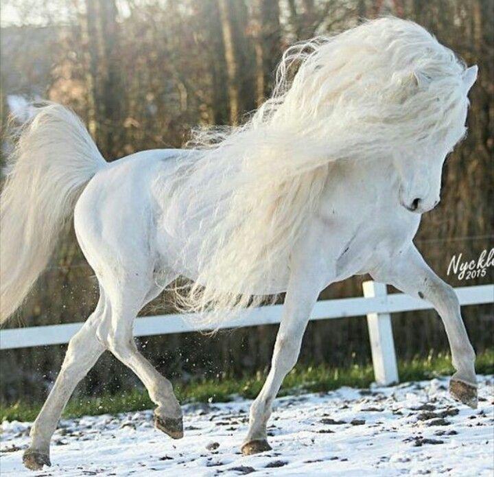 #horseriding #horserider #equine Extrem schönes prächtiges Pferderennen …   – Tiere – #equine #extrem