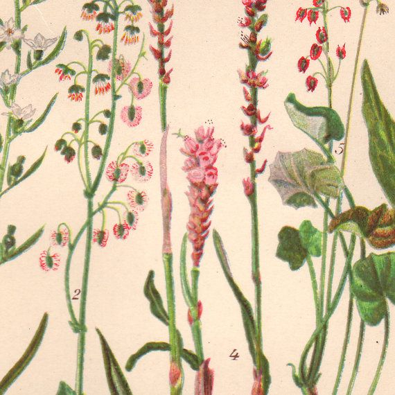 1930 Art Print Botanical Wall Decor Wildflowers Plate by AgedPage
