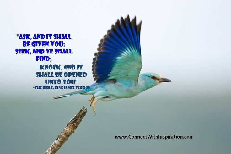 Quotes If U What to Fly You Have to Give Up the Shit That Waighs Yo Down | bird flying quotes, flight quotes.