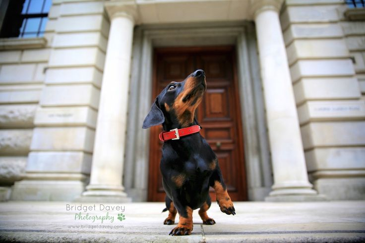 Check out today's London based session by photographer Bridget Davey! http://pawtraitperfect.com/london-calling-todays-feature-is-by-photographer-bridget-davey-2/ #pets #photography #photographytips